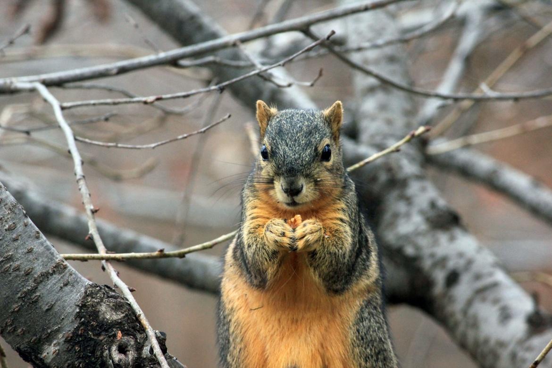 dead squirrel http://iamsherrelle.com